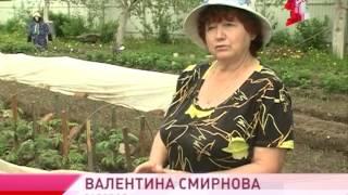 видео Как сделать ТОМАТЫ СЛАЩЕ и ВКУСНЕЕ. Как ВЫРАСТИТЬ САХАРИСТЫЕ помидоры