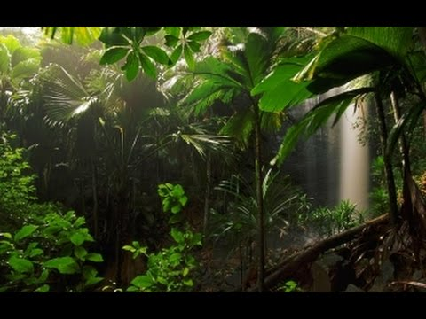 Tribal Jungle Music - Misty Rainforest