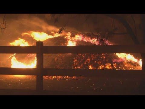 fuego-en-australia:-cientos-se-refugian-en-el-mar-por-incendios