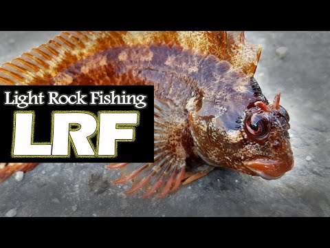 Light Rock Fishing (LRF) Techniques For Beginners.