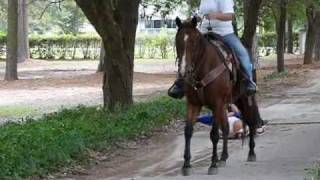 DOC - registered AQHA gelding American Quarter Horse Association