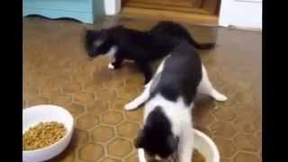 Коты после валерьянки.