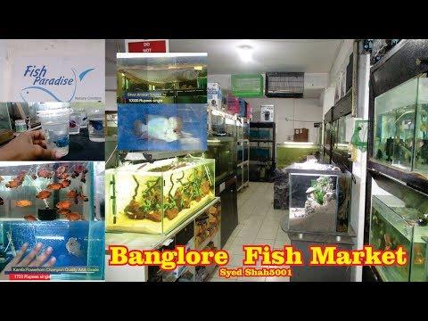 Fish Paradise AQUARIUM Fish STORE  TOUR Banglore
