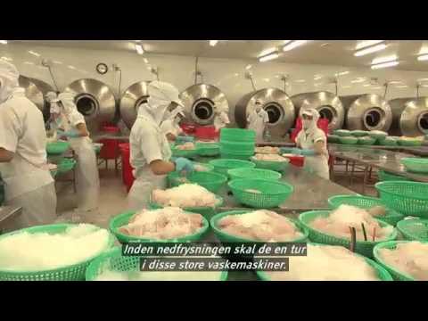 Norsk odlad lax i blåsväder.  Bland det giftigaste du kan äta