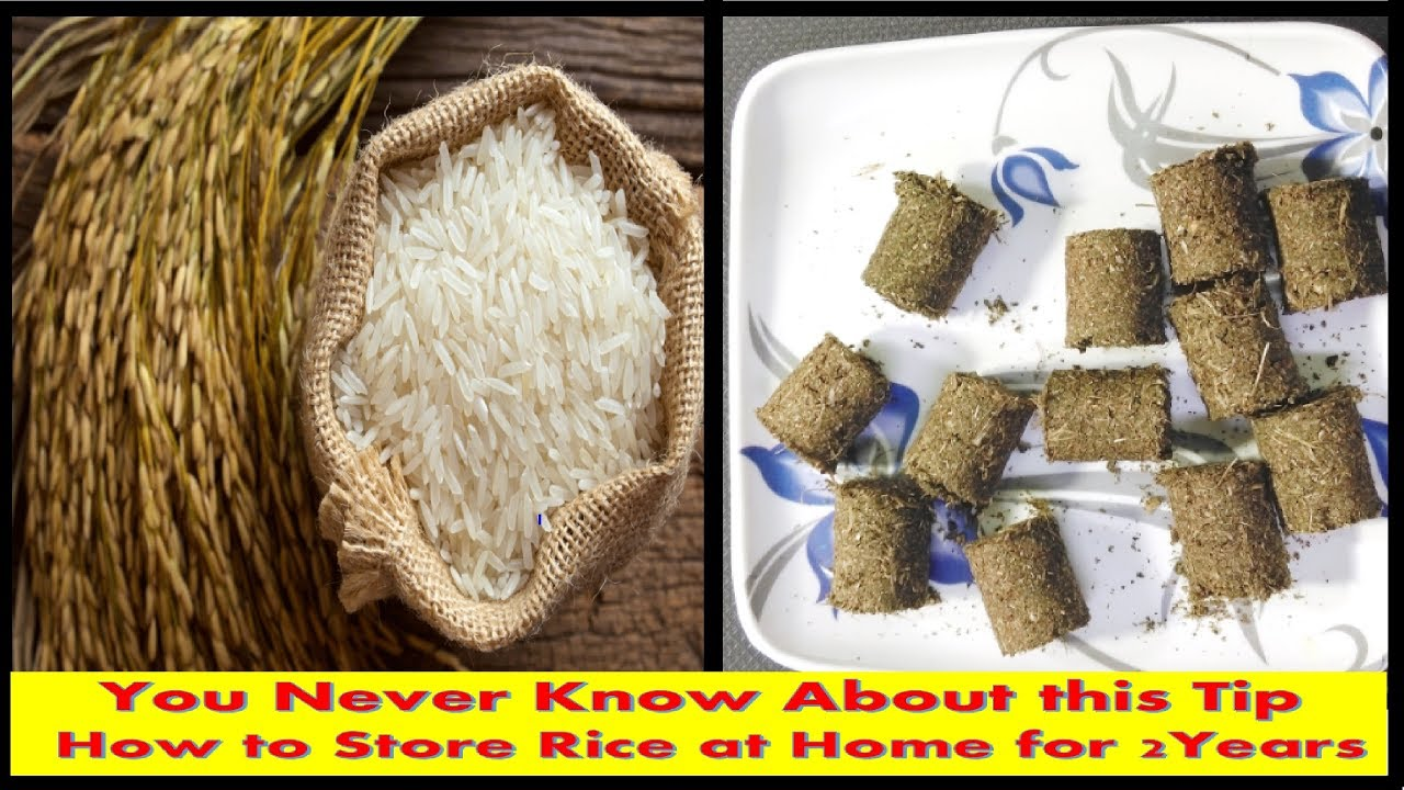 Store Without A Home How To Store Rice At Home Minimum Two Years Without Insects And Warms