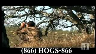 Wild Pig Hunting California 2