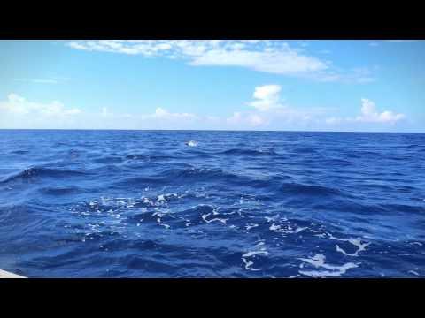Team Ripper   Mississippi Gulf Coast Billfish Classic   Huk Promo HD