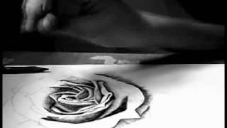 Rose Sketch Time Lapse