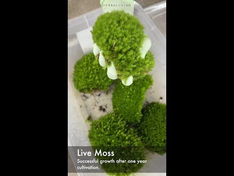 Live Moss vs. Dead Moss vs. ZERO Moss by TerraLiving