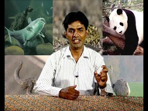 Zoogeographical Realms & Faunal Peculiarities