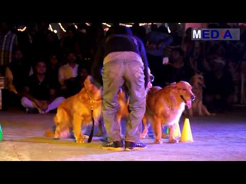 The Dog Show Dog Stunt in to the Fire - Dog Expert Show