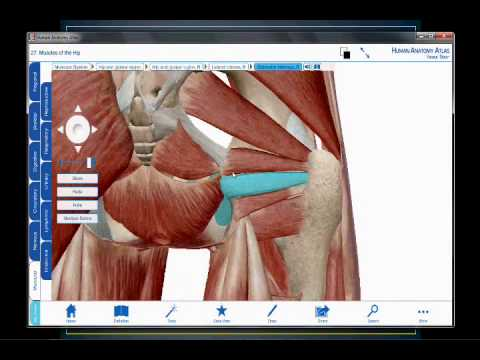 Músculos de la pelvis y de la región glútea - YouTube