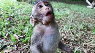 Cute baby monkey Bella fights for food, hungry baby monkey Bella crying and begging for food youtube