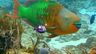 Рыбки / Fishtales  (2016) Дублированный трейлер HD