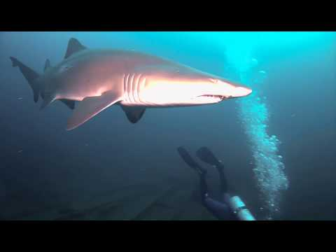 Scuba Diving Caribsea Wreck, NC. Sand Tiger Sharks (Part 1)