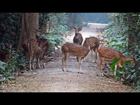 Bethuadahari Forest Safari - Inside Bethuadahari Jungle, Nadia, West Bengal