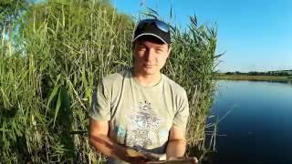 Рыбалка в Харьковской области на поплавочную снасть