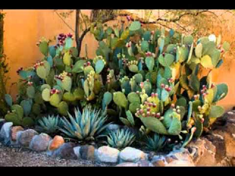 Cactus Garden Ideas image of how to cactus garden Diy Cactus Garden Decorating Ideas