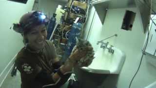SMART Chevron gas station kitten rescue