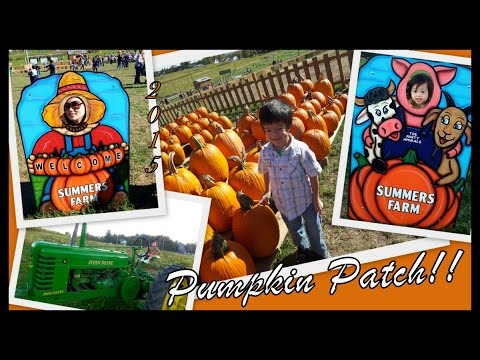 Maryland pumpkin patches and corn mazes.