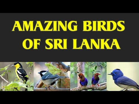 Amazing Birds Of Sri Lanka