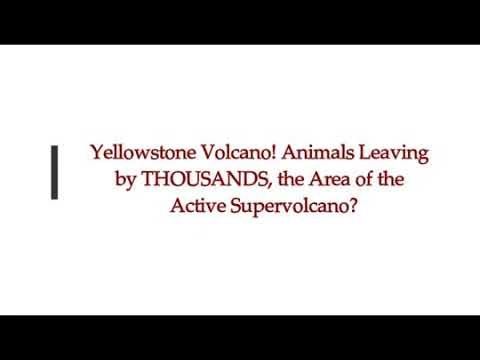 Yellowstone Volcano! Animals Leaving The Yellowstone Area By The Thousands!