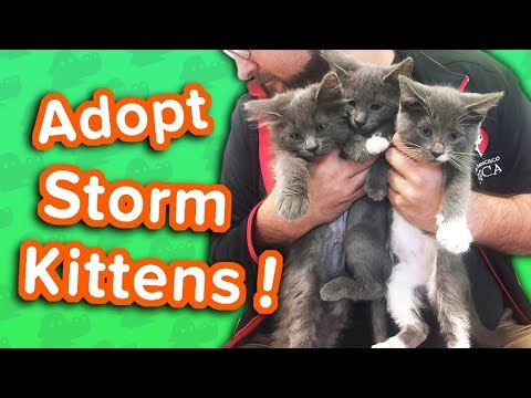 Adopt the Storm Kittens! // Adoptable Featurette