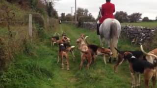 Kilkenny Huntsman calling hounds and blowing horn. The countryside ...
