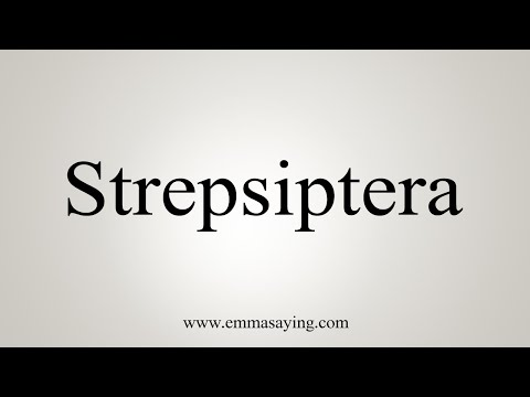 How To Pronounce Strepsiptera