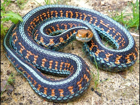 Самые Красивые Змеи