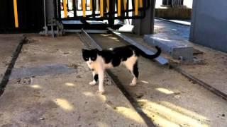 スペインのアルマデンという街の猫 Cat in Almadén Spain