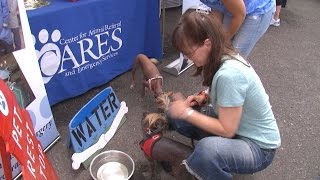 Showtime Charities to Host the Fur Follies Many Pet Rescues on Hand