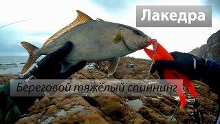 Східно-Китайське море 东海. Лакедра (紅甘), малий східний тунець (巴鰹). Берегова рибалка. 2016/10