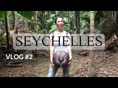 SEYCHELLES HONEYMOON, VLOG #2 - Coco De Mer, Zimbabwe | Dilya London