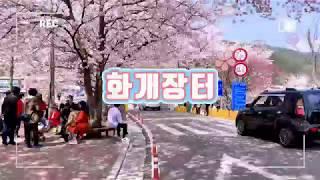 화개장터 - 벚꽃축제