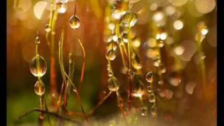 Sensorica - Natura Rerum