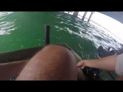 How To Master Mangrove Snapper Fishing In Miami