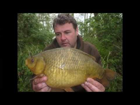 Fishing Gurus - Season 3 - Episode 3 - Johnson Lake, Godalming - Trailer