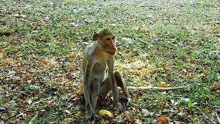 Million tear drop see male very skinny monkey From rural commune has released to join Amber group,