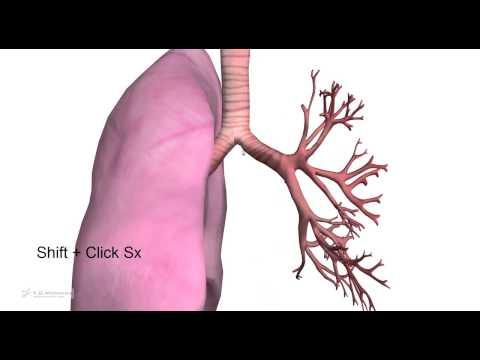 5.3 - Come studiare anatomia per il test di medicina. Atlante anatomia free online 3d
