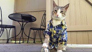 猫がオヤツを「無限にもらえる方法」を見つけた結果・・・?