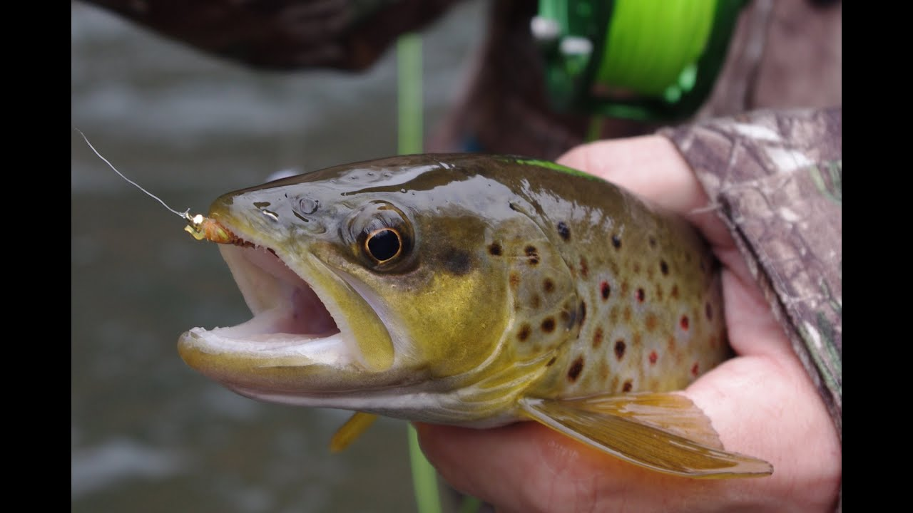 Central pa winter trout fishing non stop action youtube for Winter trout fishing