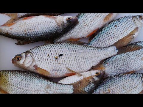 безмотылка летом для ловли белой рыбы