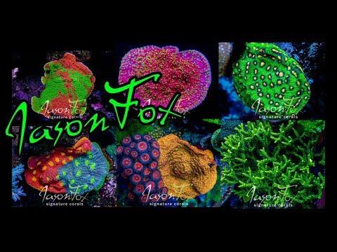 Visiting The Coral Farm of Jason Fox Signature Corals