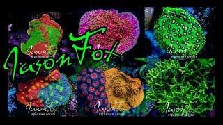 Visiting The Coral Farm of Jason Fox Signature Corals