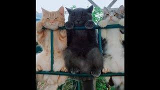 Tik Tok Lucu - Funny Pets & Animals Compilations