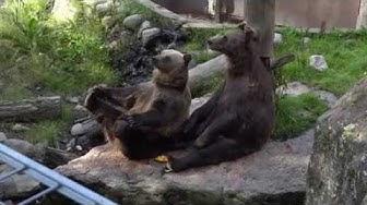 Ähtäri Zoo - kierros eläinpuistossa
