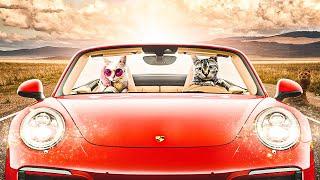 СМЕШНЫЕ КОТЫ И КОШКИ | ДО СЛЕЗ 2020 #13