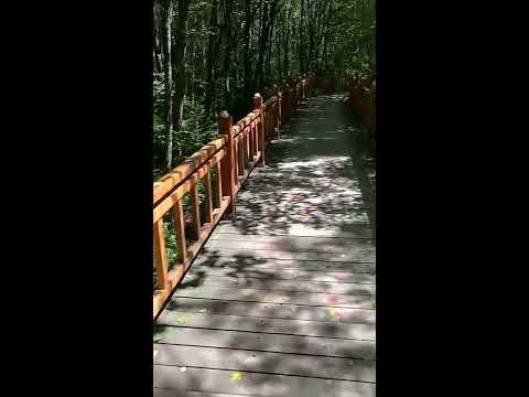 Heilongjiang Yichun City Tangwang Shilin travels