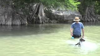 Doberman Pinscher Learns To Swim